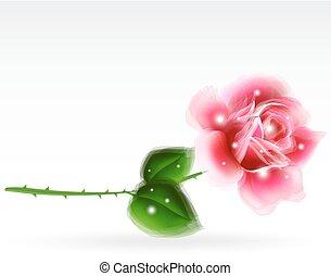 Pink rose Floral Design Element. Vector