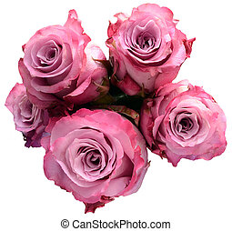 Pink rose flower bouquet isolated