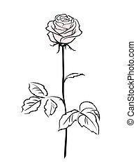 Pink rose flower isolated on the white background