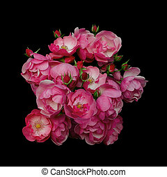 Pink rose flowers arrangement isolated on black background