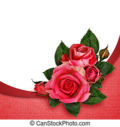 Pink rose flowers composition on pink and white background