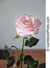 Pink rose in vase on grey background