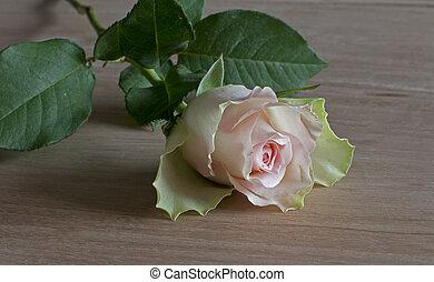 pink rose of love