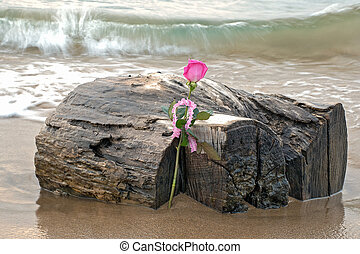 pink rose on driftwood log