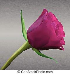 pink rose on metal background