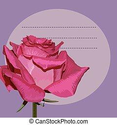 Pink rose on purple background