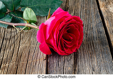 Pink rose on wooden background close-up
