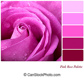 Pink Rose Palette - Pink rose colour palette with ...