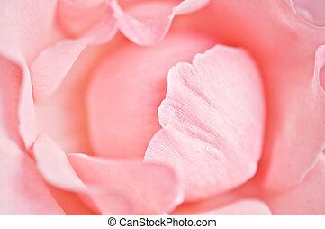 petals - pink rose petals close up