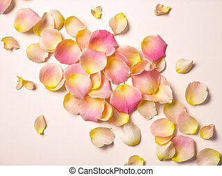 pink rose petals on pink paper background, top view