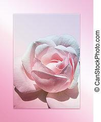 Pink Rose - Pink rose frame