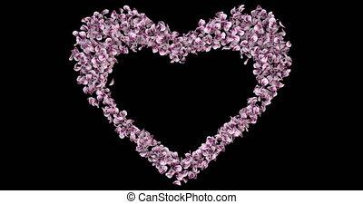 Pink Rose Sakura Flower Petals In Heart Shape Alpha Matte Placeholder Loop
