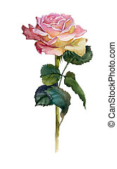 Pink rose: watercolor background, beautiful flower,...