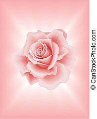 Vector Beautiful Pink Rose on the Light Background