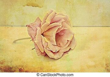 Pink rose vintage background