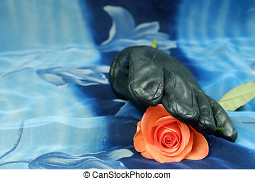 Pink rose with black glove on a blue background
