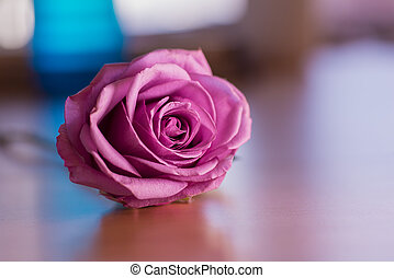 Pink rose with blurred background