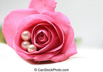 pink rose with pearls - three white pearls in a pink rose