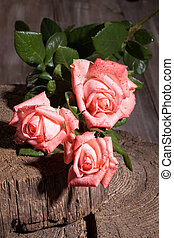 Pink Roses And Old Wood
