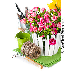 Pink roses and tulips with garden tools. Isolated on white...