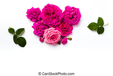 Pink roses arrangement on white background