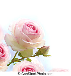 pink roses background, floral border with gradiant from blue to white dedicated for a romantic or love card, close up of the flowers.