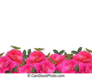 Pink Roses Border Background