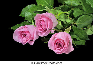 Pink roses bouquet on a black background.