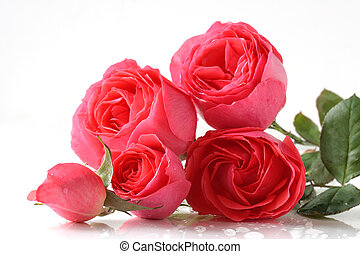 Pink roses - bunch of pink roses isolated on white
