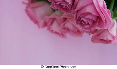 Pink roses close-up