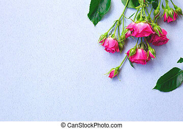 pink roses flowers on a blue background. best background for your design