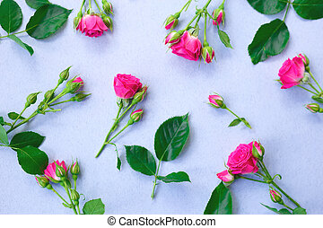 pink roses flowers on a blue background.