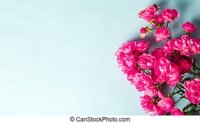 Pink roses on blue background top view