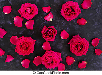 Pink roses on dark background. Top view
