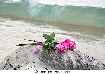 pink roses on driftwood
