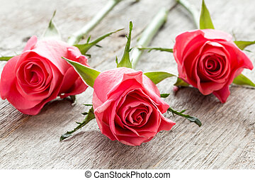 Pink roses on the wooden background.