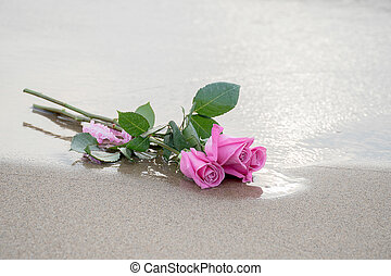 pink roses on wet sand