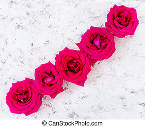 Pink roses on white background. Top view