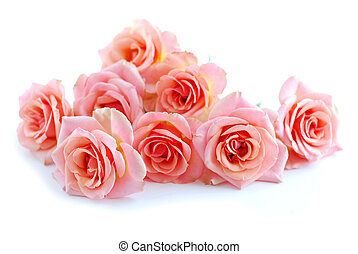Pink roses on white - Pile of pink rose blossoms on white ...