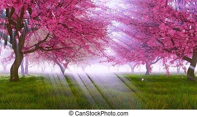 Pink sakura cherry trees in blossom slow motion - Sakura...
