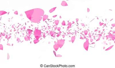 pink sakura leaves heavy twirly flying isolated background