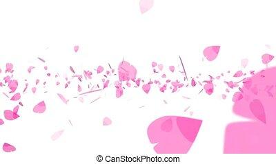 pink sakura leaves twirly flying isolated background