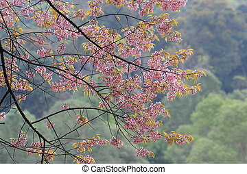 Pink sakura tree in forest