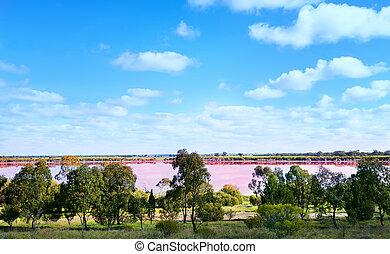 Pink salt lake and trees in Western Australia