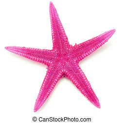 Pink seastar, isolated on white background.
