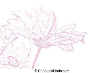Pink Shasta Daisy Illustration - a pink chalk illustration ...