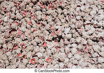 Pink Shell Collection - Shells on Mexican beach