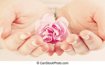 Pink soft flower in woman hands. Spa, protection, care.