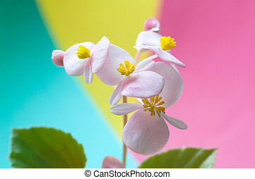 pink soft flowers