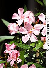 spring flower in garden